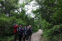 Rockjumper's 2019 Texas birding tour group looking to the treetops in Texas Hill Country