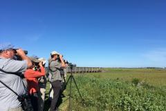Rockjumper's 2019 Texas birding tour group scanning the Anahuac Wildlife Refuge