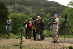 Rockjumper's 2019 Texas birding group in Lost Maples Natural Area