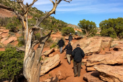 Rockjumper's 2019 Colorado birding tour group hiking for Pinyon Jay in Colorado National Monument