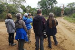 Rockjumper's 2018 South Africa birding tour group run into a Giraffe