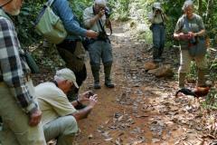 Rockjumper's 2020 Sri Lanka birding tour group greet a friendly Sri Lanka Junglefowl in Sinharaja National Park