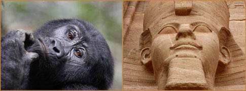 Mountain Gorilla female by Jonathan Rossouw (Uganda) and Abu Simbal temple detail by Markus Lilje (Egypt)