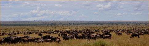 The Serengeti wildebeest migration by Rainer Summers (Tanzania)