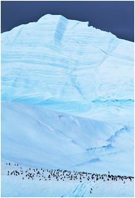 Adelie Penguins on ice by Marius Coetzee