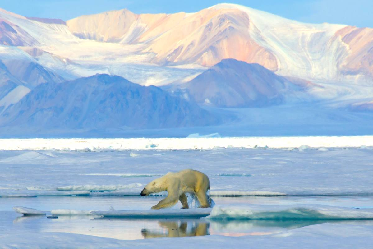 Polar Bear by Boris Wise