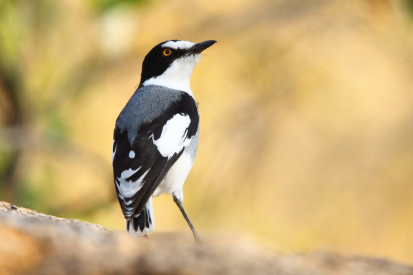 Namibia's 15 key birds
