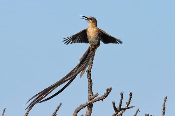 3. Sugarbird-Cape-Cape-Point-SA-AR-75