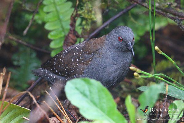 ecuadorbirdingtours