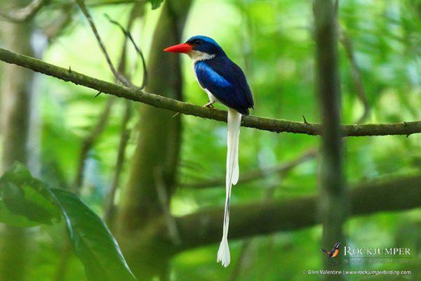 papuabirdingtours
