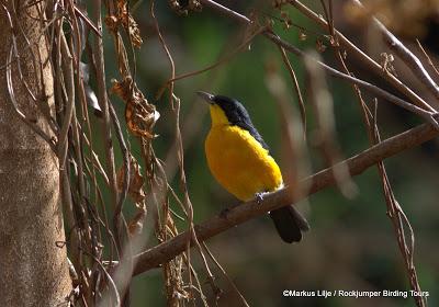 Cameroon birding by Keith Valentine & Markus Lilje