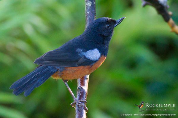 colombiabirdingtours