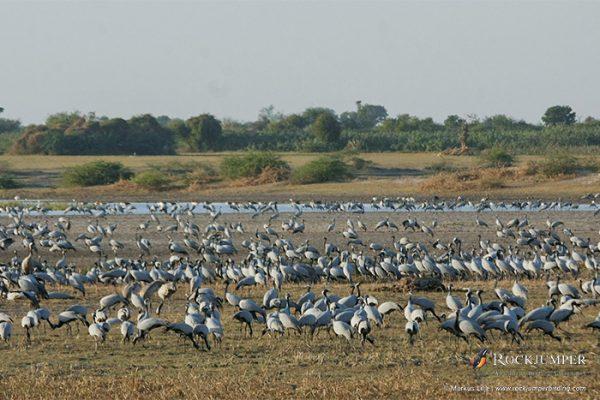 ethiopiabirdingtours