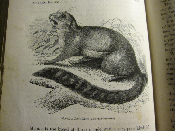 ther more fanciful discoveries on his journey included the Ivory-Eater (Sciurus eborivorus)