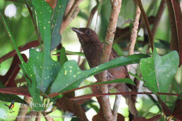Morningbird by Erik Forsyth