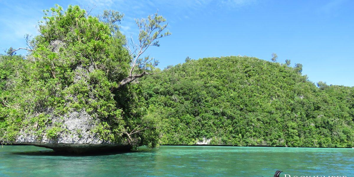 Micronesia - Palau Birding Recce