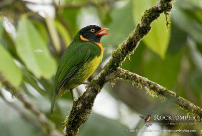 birdphotographytours