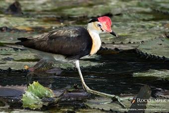 Bird Watching in Papua New Guinea