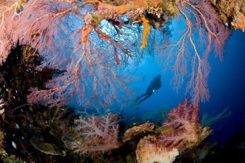 Melanesia holds some of the most spectacular coral reefs in the world with 3/4 of the world's coral species.