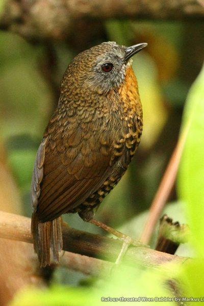 Bhutan Birding