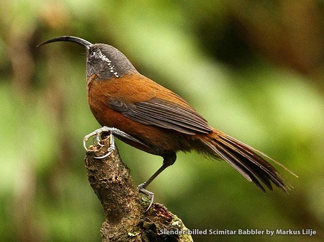 Bhutan Birding by Markus Lilje
