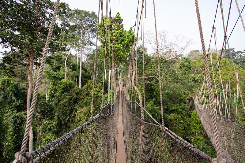 Kakum Canopy Walkway by Adam Riley