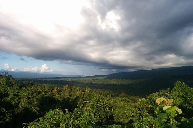 Lowland rainforest of Nimbokrang by Stephan Lorenz