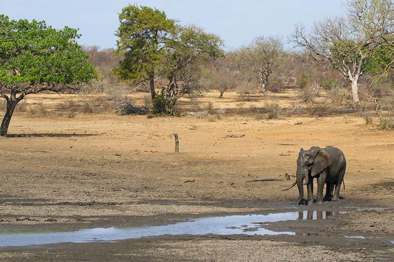 The elephant mud bathing by George L. Armistead