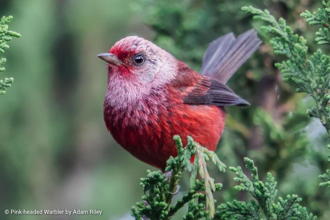 Central America Birding