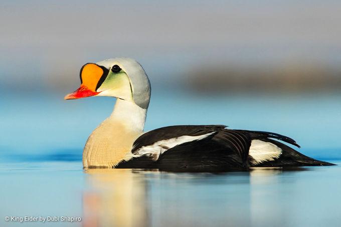 North America Birding