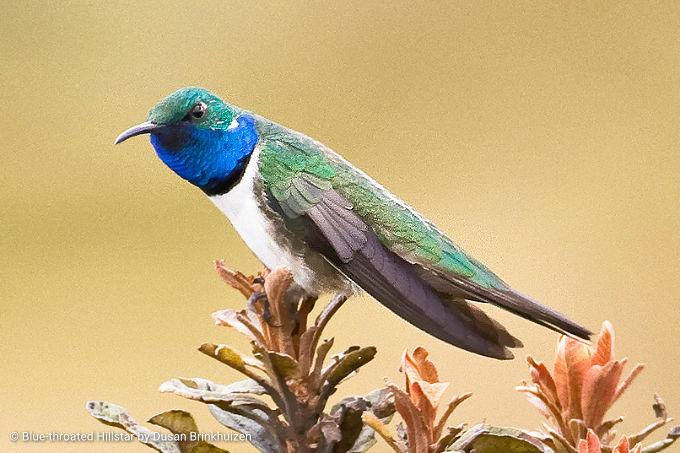 South America Birding
