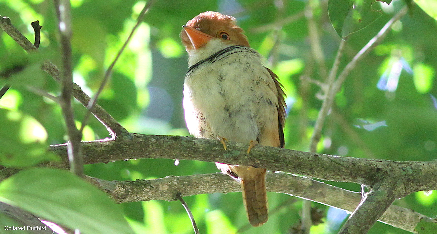 Amazon Adventure in Colombia: Birding Mitú by Stephan Lorenz