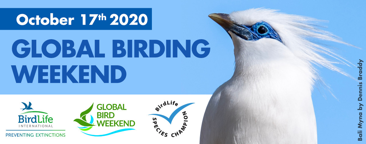 Going For It – The Global Bird Weekend