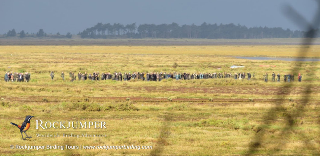 Volumes of Birders at the Scrub Robin Twitch