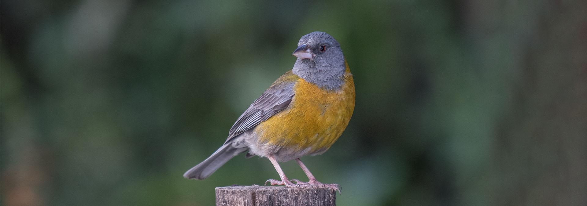 Bolivia - Mega Birding Tour